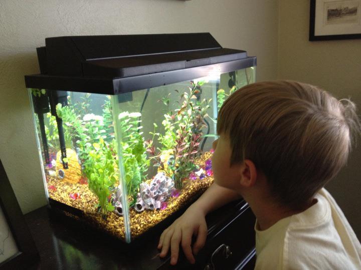 how to catch fry in aquarium